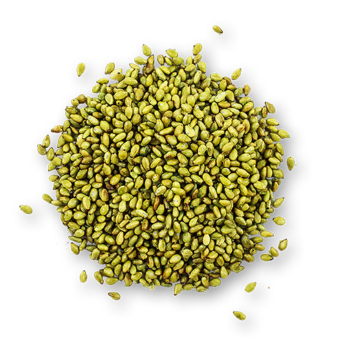 Toasted Wasabi Sesame Seeds close up