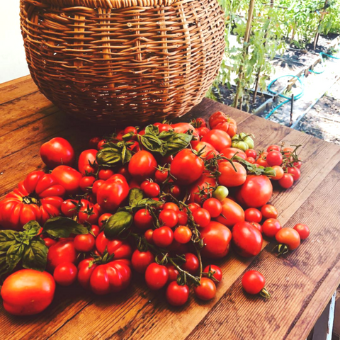 Selection of homegrown tomatoes
