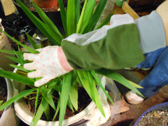 UV Protective gloves SPF50