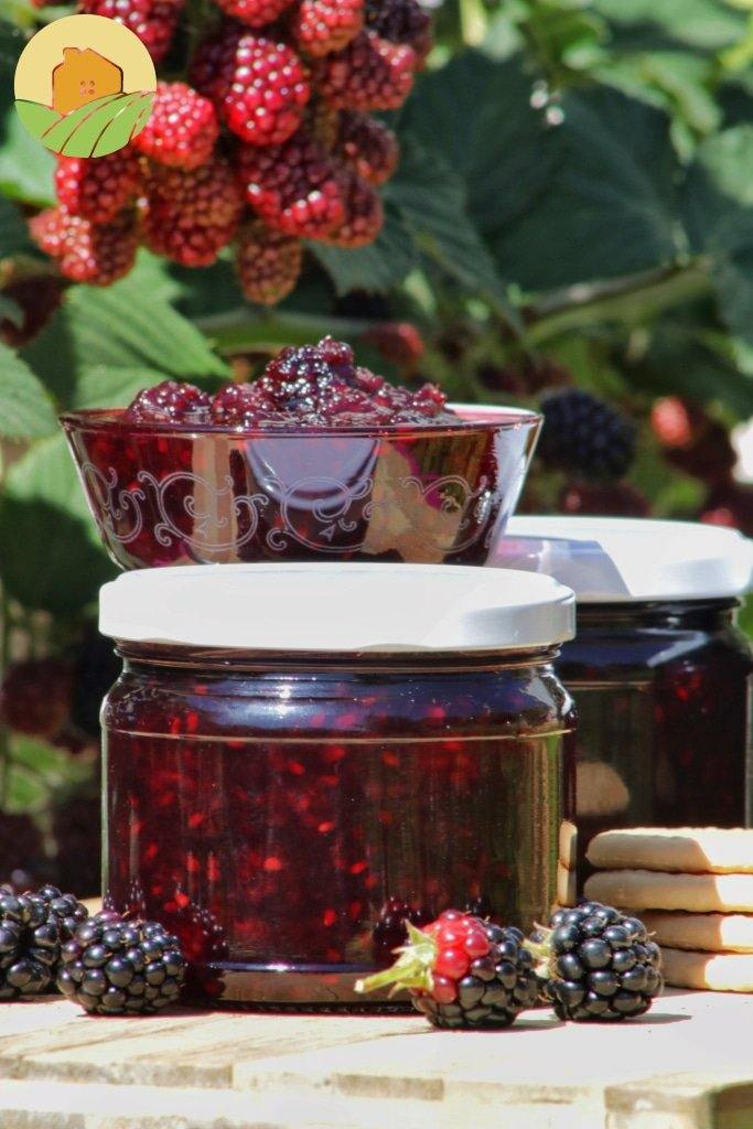 Blackberry Marmalade -  مربى العليق شقف