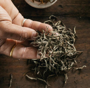GUEST TEA Silver Buds Darjeeling - Loose Leaf - White Tea