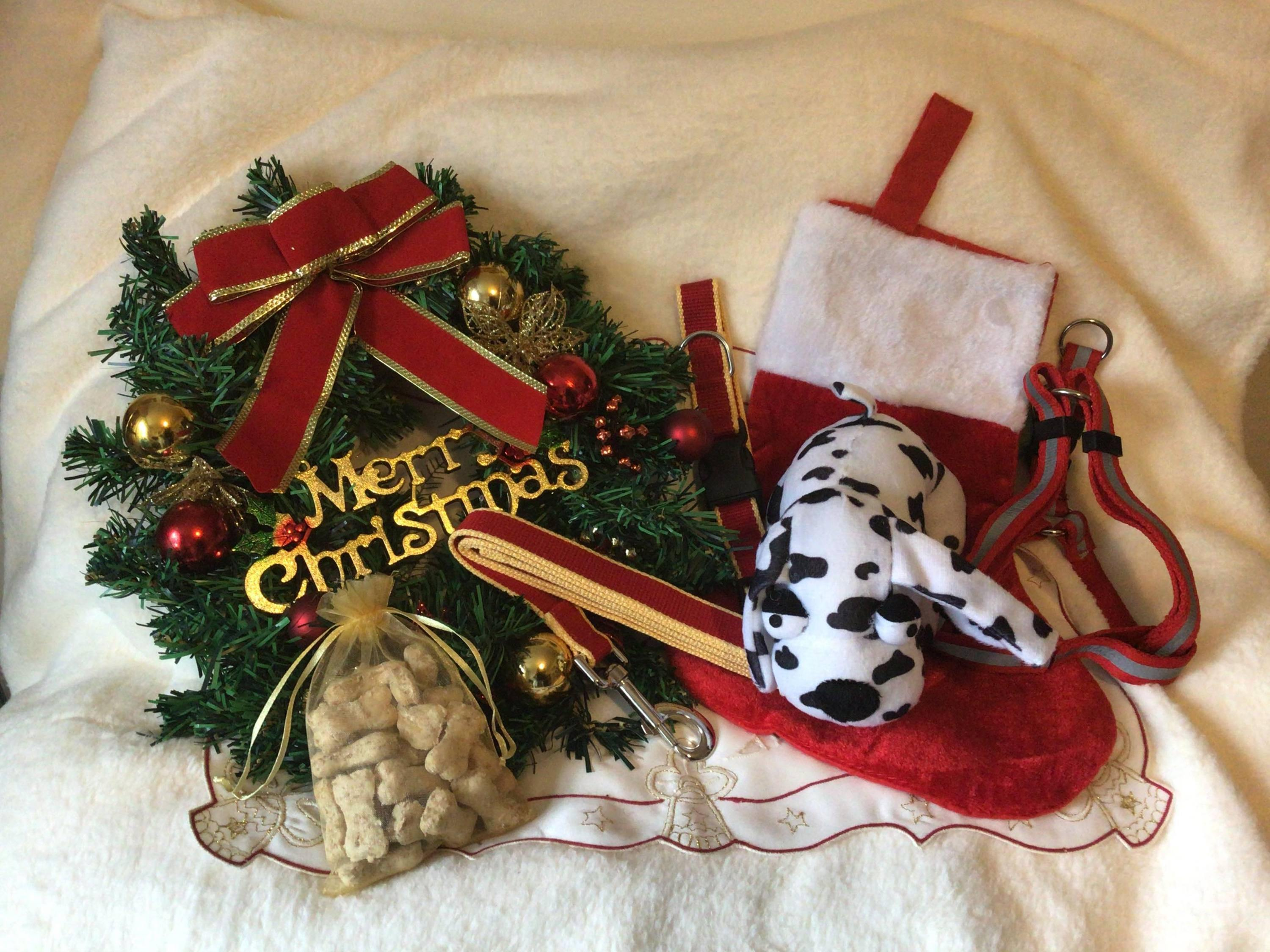 Pet Empire's Holiday Stocking - DadiTude