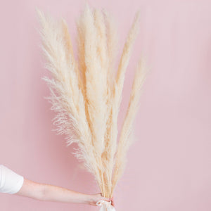 Pampas Grass Bunch