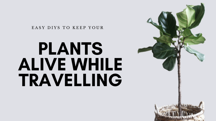 Easy DIYs To keep You Plants Alive While Travelling