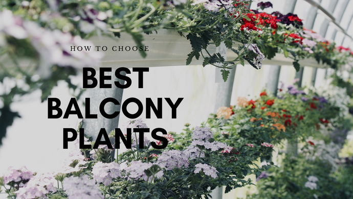 How to Choose the Right Plant for your Balcony