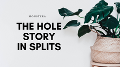 Monstera: The Hole Story in Splits