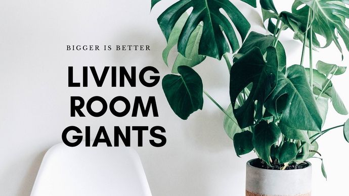 5 Best choices for Tall Plant Lovers