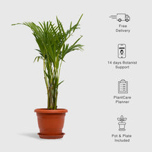 Load image into Gallery viewer, Areca Palm, Dypsis Lutescens - Leafy Island