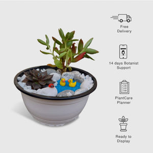 Miniature Garden - Pond Theme - Plants for Gifting