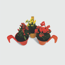 Load image into Gallery viewer, Kalanchoe Plants in Railing Pots (Set of 3)