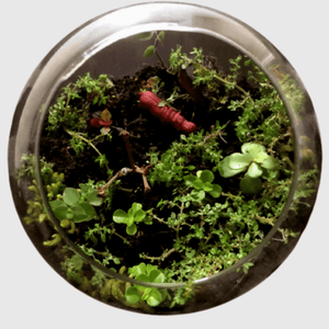 Terrarium - Jungle Theme