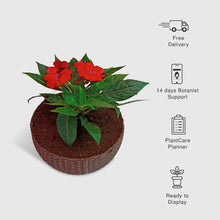Load image into Gallery viewer, Impatiens Walleriana in a Woven Basket Planter