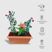 Load image into Gallery viewer, Rose & Hibiscus Plants in Rectangle Pot - Garden Set