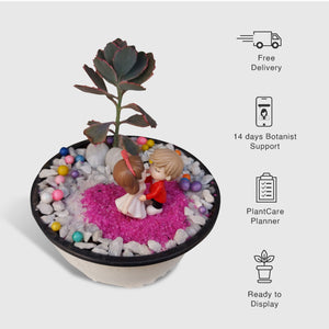 Valentines Special - Miniature Garden - Plants for Gifting - Leafy Island