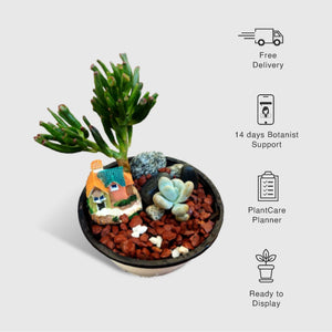 2 Succulents Set - Plants for Gifting - Desert Theme