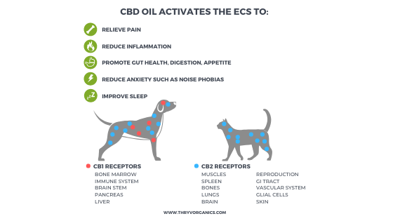 CBD Oil and benefits to pets