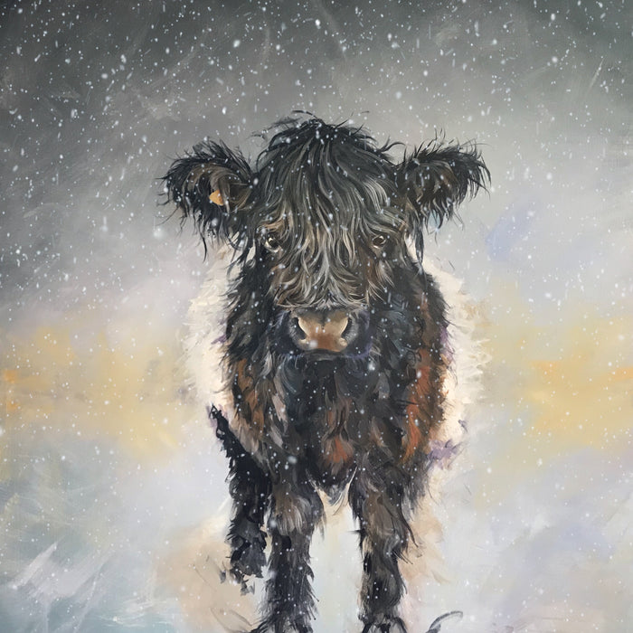 Belted Galloway painted by Sam Morris Cow Art