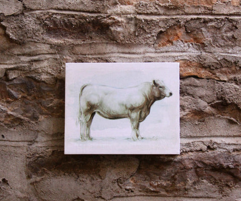 White Bull Canvas Print