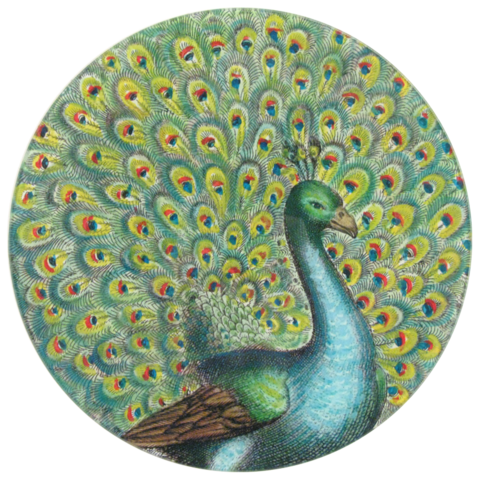 Peacock Portrait 10