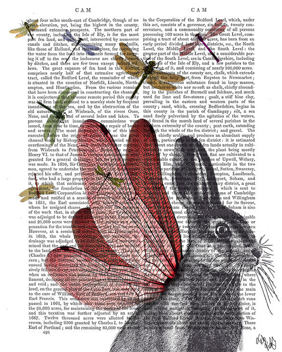 Dragonfly Hare Book Print