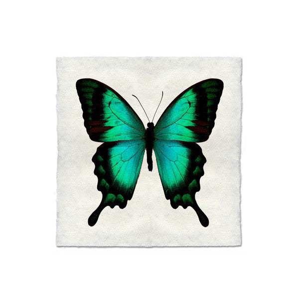 Butterfly #1 Print