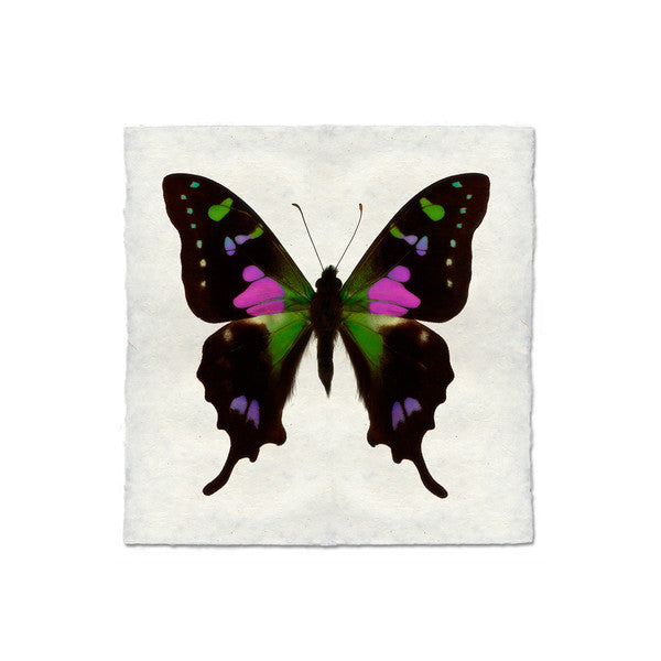 Butterfly #2 Print