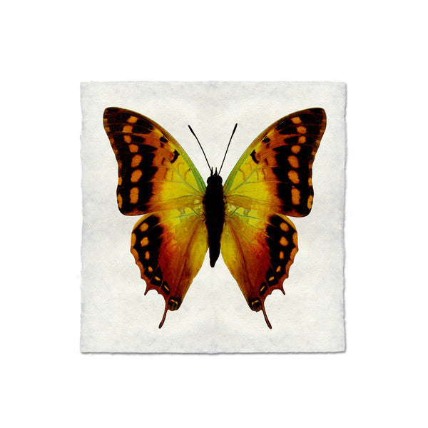 Butterfly #4 Print