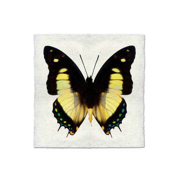 Butterfly #5  Print
