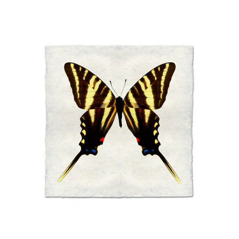 Butterfly #6 Print