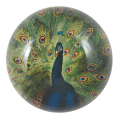 Peacock Dome Paperweight