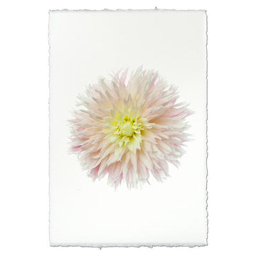 Dahlia Print - Just Married