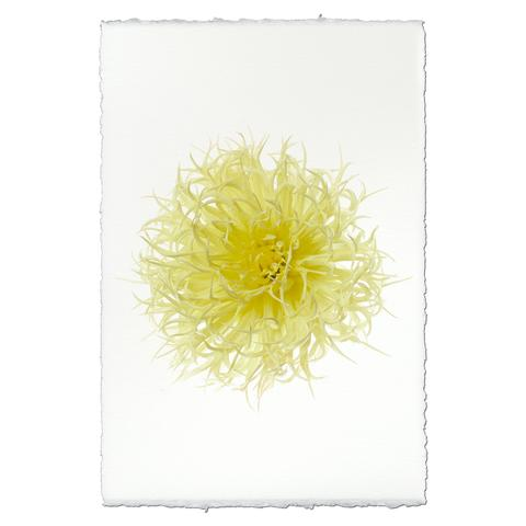 Dahlia Print - North Lake Heritage