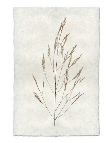 Flora Form - WHEAT
