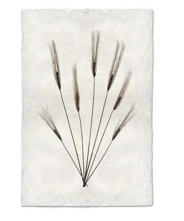 Flora Form - WHEAT #2