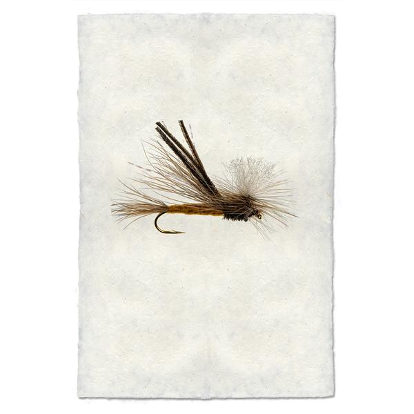 Fly Fishing Print - Bugmeister