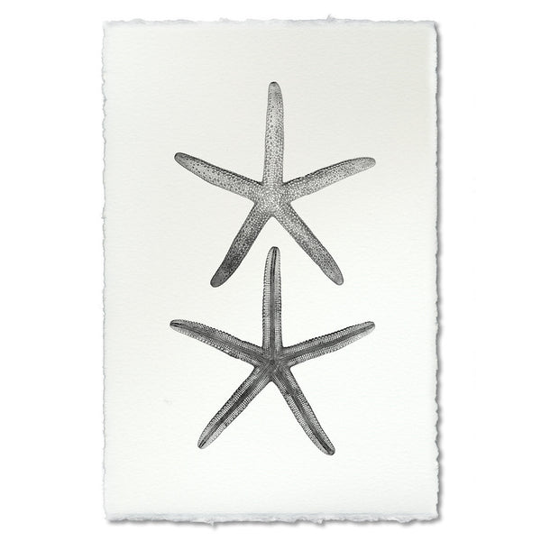 "Marine Print ""Double Sea Star"""