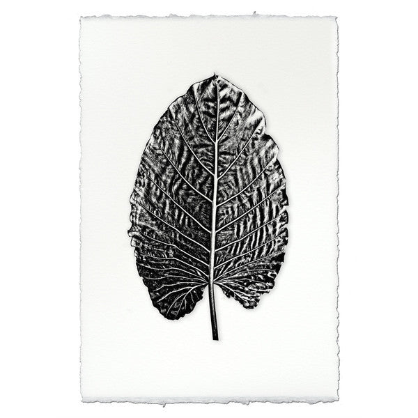 "Leaf Print ""Elephant Ear"""