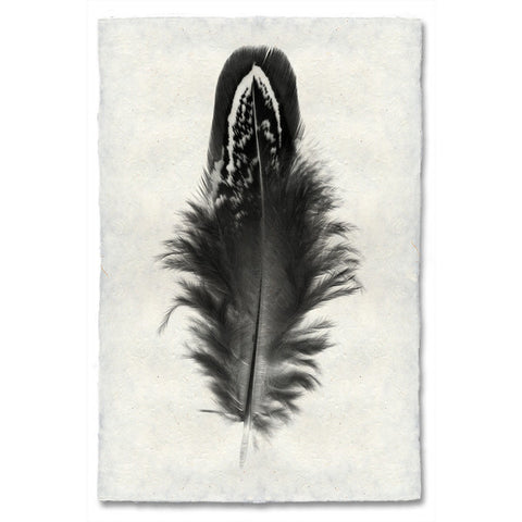 Feather #3 Print