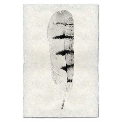 Feather #8 Print