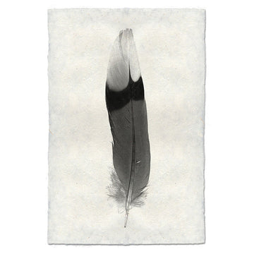 Feather #9 Print