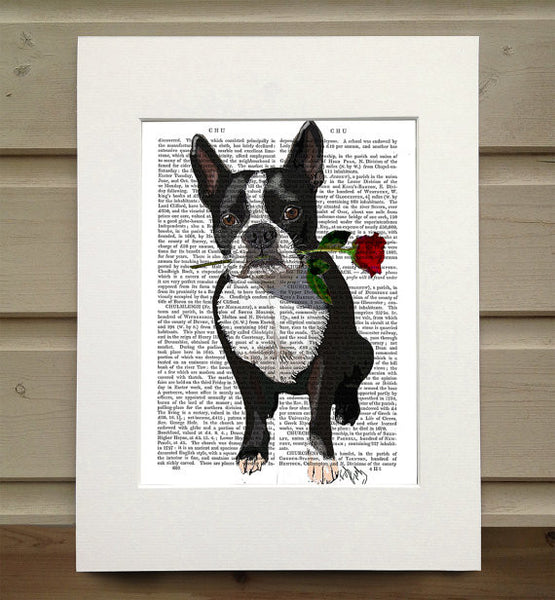 Boston Terrier with Rose in Mouth Book Print