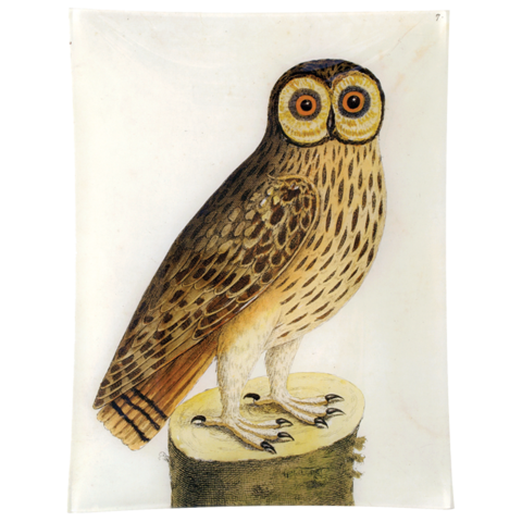 Great Brown Owl 10x13 Rect. Tray