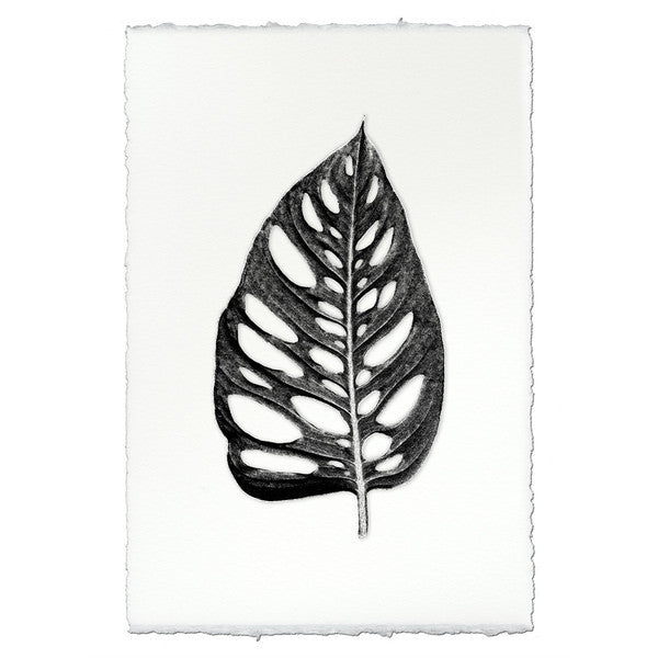 "Leaf Print ""Wholly Leaf"""