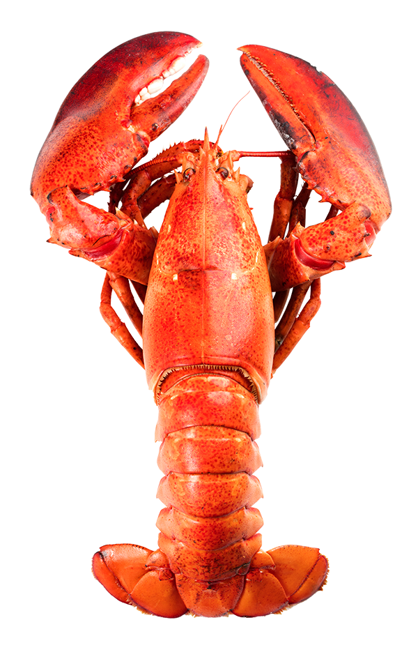 How to Boil a Lobster - Crazy Fresh Lobster