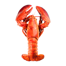 Load image into Gallery viewer, 4 to 9 lbs lobster