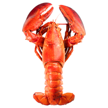 Load image into Gallery viewer, 9 lbs + lobster