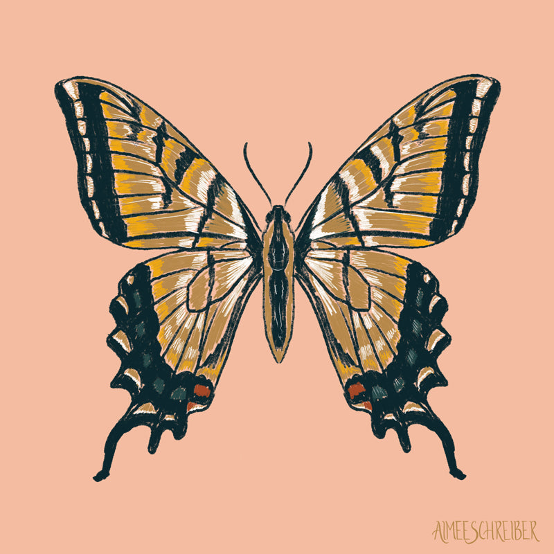 Gold Swallowtail Butterfly Illustration by Aimee Schreiber