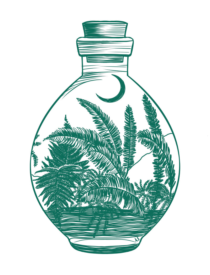 ferns moon potion illustration by Aimee Schreiber