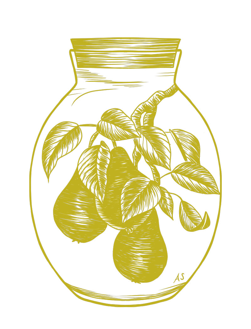 Pears illustration by Aimee Schreiber