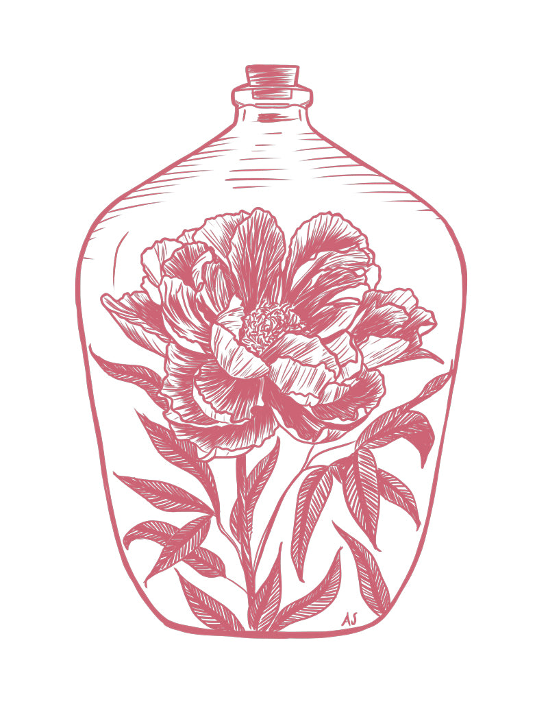 pink peony flower illustration by Aimee Schreiber